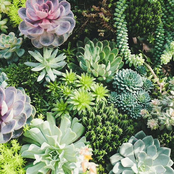 coaching succulents